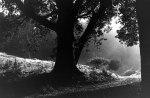 tree-merton